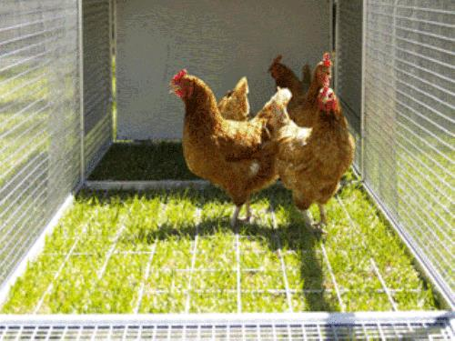 Chicken coop barter royal run deluxe for Chicken run for 6 chickens