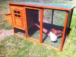 Christmas Chickens & Coop Package
